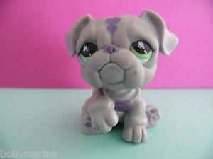 petshop chien bouledogue gris / grey bulldog dog N° 916