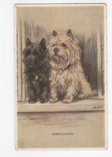 Cairn Terrier Vintage  Dog Postcard Mac Lucy Dawson 1940