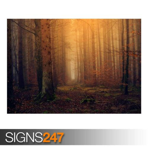 AD792 ENCHANTED FOREST BACKGROUND Poster Print Art A0 A1 A2 A3 NATURE POSTER