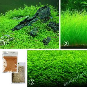 10g-Water-Grass-Seeds-Live-Plant-Fish-Tank-Aquarium-Landscape-Decor-Ornament