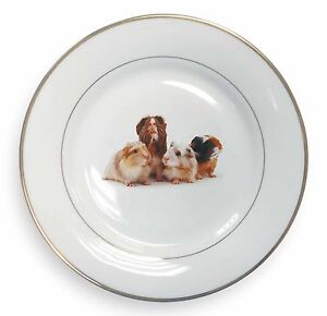 Guinea-Pigs-Gold-Rim-Plate-in-Gift-Box-Christmas-Present-GIN-1PL