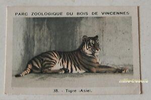 Expressif Image Collection Chromo : Tigre (asie) (38) Parc Zoologique De Vincennes Pf