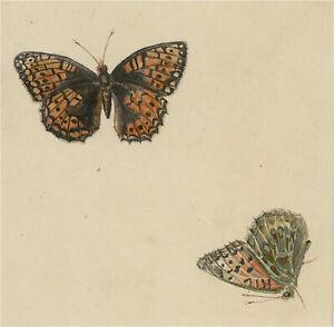19th Century Watercolour - Butterflies