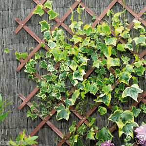 Image Is Loading Expanding Wooden Garden Climbing Plant Trellis Fence Panel