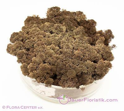 Islandmoos braun 1 kg konserviert erdig natürlich humusfarben ocker preserved