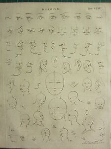 1797 GEORGIAN PRINT ~ DRAWING VARIOUS EXAMPLES FACE EYES EARS NOSE MOUTH etc