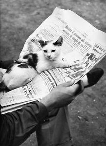Les-Chats-de-Rome-034-D-HAUSWALD-circa-1960