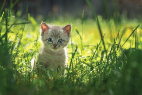 Weidezaungerät Ellofence M15 230 V Elektrozaungerät Hunde Katzen Extrem leise