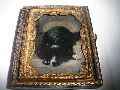 Antique rare  ambrotype dog  Newfoundland