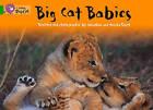 Big Cat Babies Workbook by HarperCollins Publishers (Paperback, 2012)