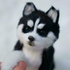 Husky-Plush-Stuffed-Animal-Dog-Simulation-Doll-Toy-Cute-P1I1