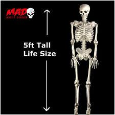 Tamaño de la vida Colgante Esqueleto 5ft Halloween Fiesta Decoración/Prop cementerio al aire libre