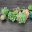 FEPITO-15-Pcs-Artificial-Succulent-Plants-Green-Unpotted-Faux-Flower-Succulents thumbnail 5