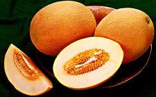 20 Graines de Melon Ananas / Melon Citron d′Amérique