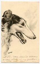 Joli portrait de chien LEVRIER . Pretty dog  .Greyhound