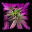 Psychedelic Weed Leaves Throw Pillow Weed Cannabis Marijuana Ganja 420 Hemp MMJ