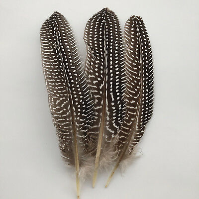 Beautiful natural guinea fowl feathers 6-8 inches 15-20 cm 10-100pcs 9 colors