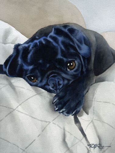 BLACK PUG PUPPY Dog Watercolor 8 x 10 Art Print by Artist DJR