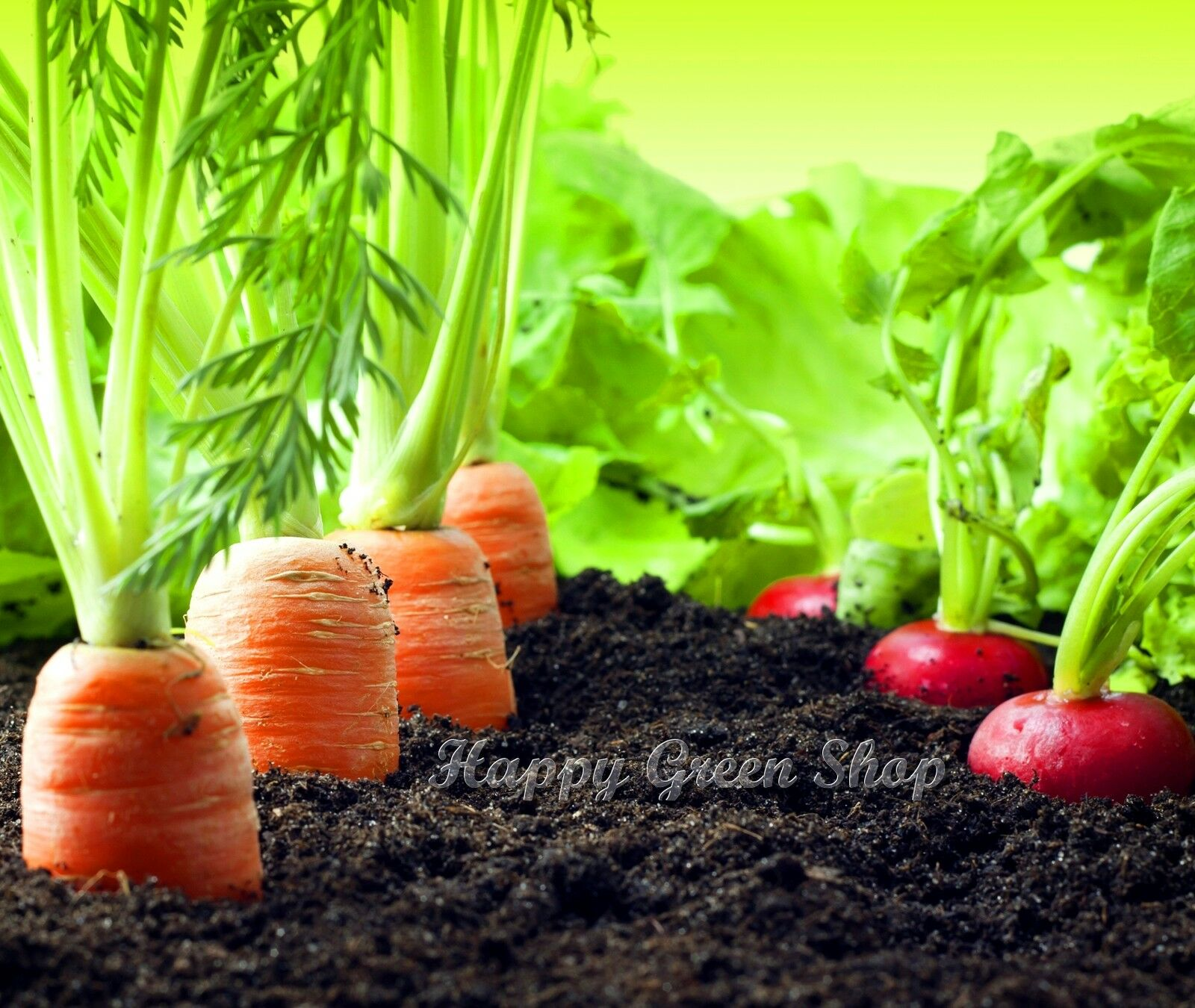 5 Mtr Seed Tape 1 Packet Carrot Beetroot Broccoli Vegetable Collection Seeds