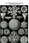 Plate 9 Hexacoralla, Coral (Ernst Haeckel) 200 Page Lined Journal: (Artforms of Nature 1904) Blank 100 Page Lined Journal for Your Thoughts, Ideas, and Inspiration by Jmm Shepperd (Paperback / softback, 2014)