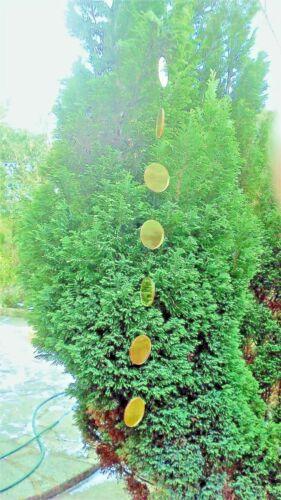 Jardin Miroirs suspendus pendantes Golden suspendus miroirs 2 FT environ 0.61 m Long Or