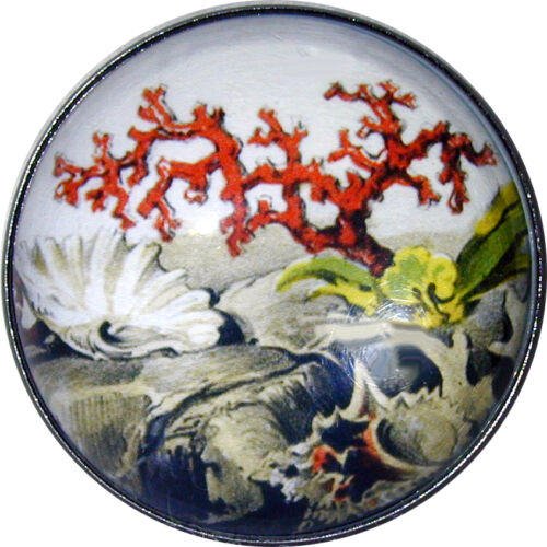 Crystal Dome Button Lg Sz Coral Reef Sea Life SL 25  FREE US SHIPPING