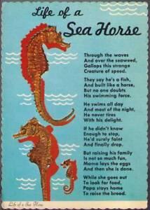 vyd-Postcard-Life-of-a-Sea-Horse