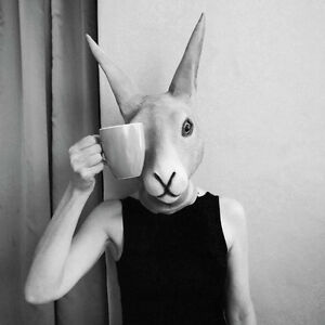 GILLIE-AND-MARC-Direct-from-artists-Authentic-photographic-print-Rabbit-coffee