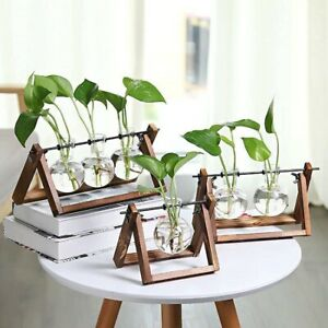 Wooden-Plant-Stand-w-Glass-Vase-Tabletop-Glass-Planter-Hydroponic-Plant-Stand