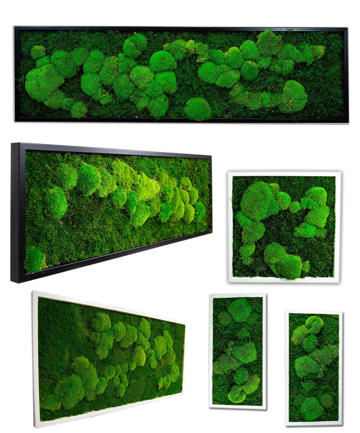 Images moosbilder moosbild acheter la fresque mooswand Déco Poster pflanzenbild