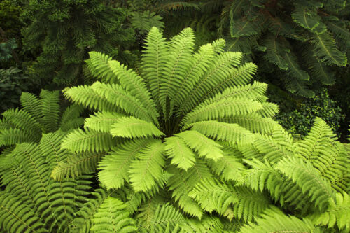 Garten Pflanzen Samen Zierpflanze Saatgut Kräuter Ziergras BAUMFARN