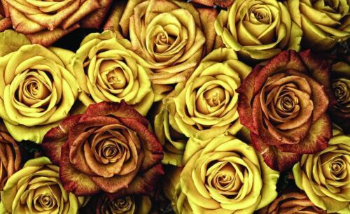 VLIES FOTOTAPETE BLUMEN Wanddeko Poster   F15909 XXL Rose Blumen Muster Abstrakt
