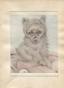 Edward Julius Detmold Vintage Print Toy Pomeranian-The Book of Baby Dogs 1929