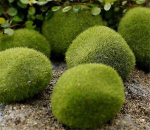 Diy Moss Balls Artificial Grass Mini Fairy Garden Decor Micro