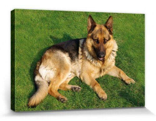 Deutscher Schäferhund Tier-Poster Leinwanddruck Bild #110525 Hunde 30x20cm