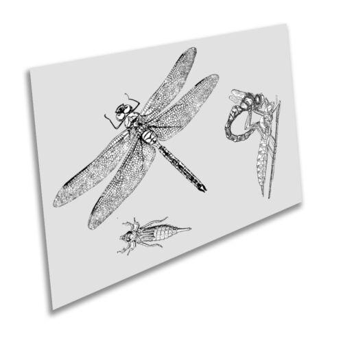 Vintage Art Print Poster A1 A2 A3 A4 A5 Dragonfly Life Cycle Grey