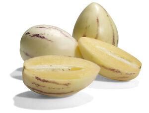Pepino-Dulce-Melon-Pear-Solanum-Muricatum-Fruit-Seeds-10-PCS-EXOTIC-RARE