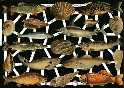 Fische & Muscheln Sehr Schön # Glanzbilder # Ef 7259 Ein Kunststoffkoffer Ist FüR Die Sichere Lagerung Kompartimentiert