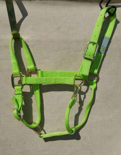 Brand new LIME premium halter by Hamilton SMALL HORSE SIZE LOT OF 6