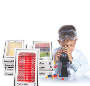 Microscope-Prepared-Plastic-Slides-Studend-Biological-Specimen-for-Kids-Children