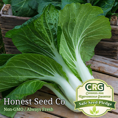 800 Pak Choi Chinese Cabbage Bok Choy Seeds Usa Non Gmo Fresh Garden Seeds Ebay