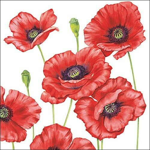 5  X  Paper party Napkins for Decoupage Romantic Poppy Poppies Napkin Art