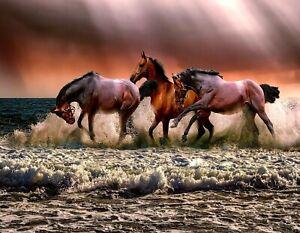 METAL FRIDGE MAGNET Wild Horses Foal At Sunset Horse Western