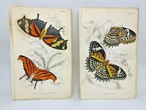 Jardine-Hand-Colored-Engraved-Butterflies-Moths-1884-Plate-14-19