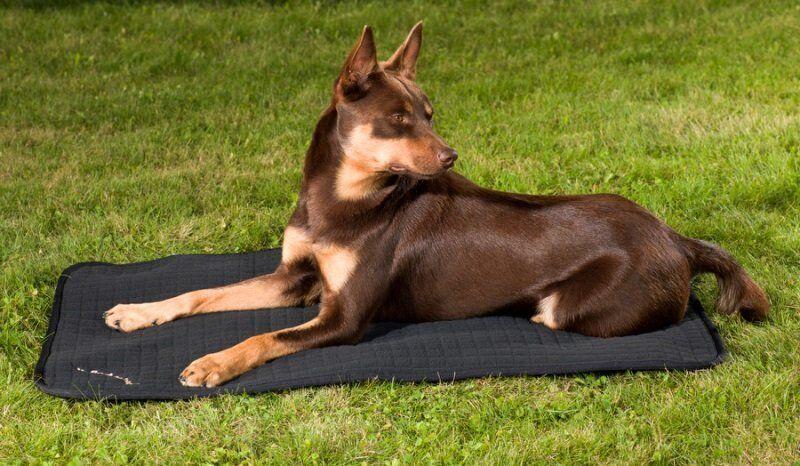 Back on Track Hunde Matratze Hundebett Decke Allround schwarz Größe wählbar