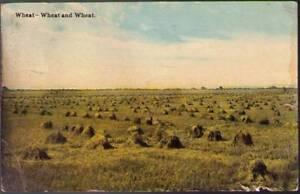 tzz-Postcard-Wheat-Wheat-and-Wheat
