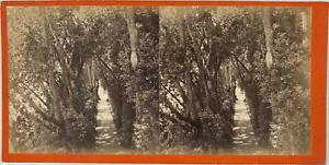 Stéréo, Italie, villa Pallavicini, jardins  Vintage stereo card,  Tirage album