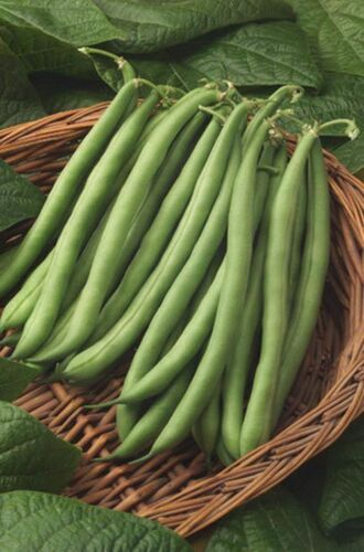 Climbing french beans Santa Anna 10 seeds