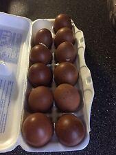 8+ SHOW QUALITY French Black Copper Maran hatching eggs.