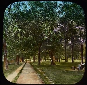 Magic Lantern Slide A GROVE OF TREES IN SUMMERTIME C1890 VICTORIAN PHOTO